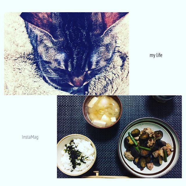 * 今日のご飯作り終わって、 待ち中、、に * 昨日の夜はご飯🍵 & かすちゃん😺 * * なすが1本65円だったので ✔️鶏肉と茄子のにんにく醤油炒め * 卵使いたかったので、 ✔️ポーチドエッグと豆腐の味噌汁 * 意外とはまる ✔️お魚ふりかけ * 旦那の好みでなかなかレパートリーにならないですが、 これはレパートリーに入りました🤗 * * #mylife#cooking#japanesefood#cat#catstagram#catlover#おうちごはん#お家ご飯#夜ご飯#料理#茄子#鶏肉料理#にんにく料理#味噌汁#器#うつわ好き#ねこ#ニャンスタグラム#愛猫#キジトラ#ぺこねこ部#ふみふみ#ふわもこ#暮らし#日々