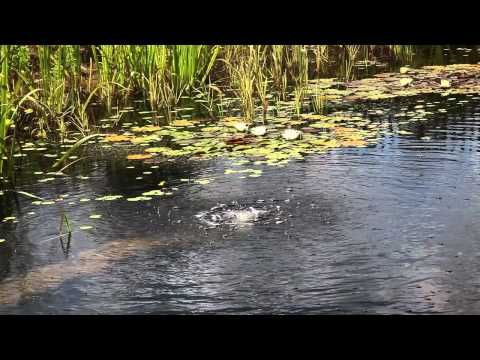 David Pagan Butler introduces natural swimming pools: beautiful swimming ponds that require no chemicals, just plants and a simple solar powered filter pump to clean the water. This is the trailer for the full DVD available from http://www.green-shopping.co.uk/dvds/natural-swimming-pools.html