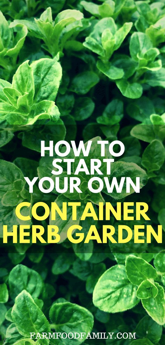 How To Begin Your Personal Container Herb Backyard – FarmFoodFamily.Com