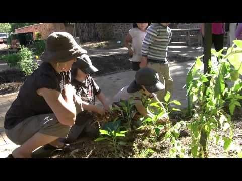 Vignette No. 18: 'Working in a community garden'... This vignette shows the value of small group experiences of four-year-olds working with their educator in a community garden near their centre. It also features the respectful relationships and responsiveness to children as they visit the community garden regularly.