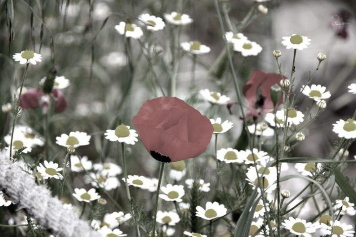 Flowers in Jerusalem Hills, Israel