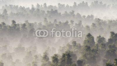Wald Fototapete günstig kaufen | Fototapeten | Bildtapete | Wandtapete | Vliestapete