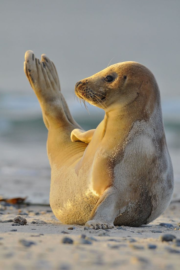 Seal posing like a model by Rob Jann ❤❤❤
