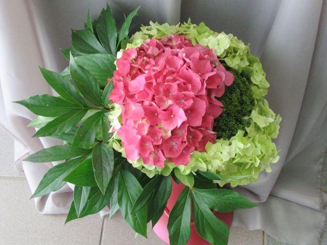 Kiedy I Jak Sadzic Hortensje Z Nasion Jak Wyhodowac Hortensje Z Nasion Floral Wreath Plants Hydrangea