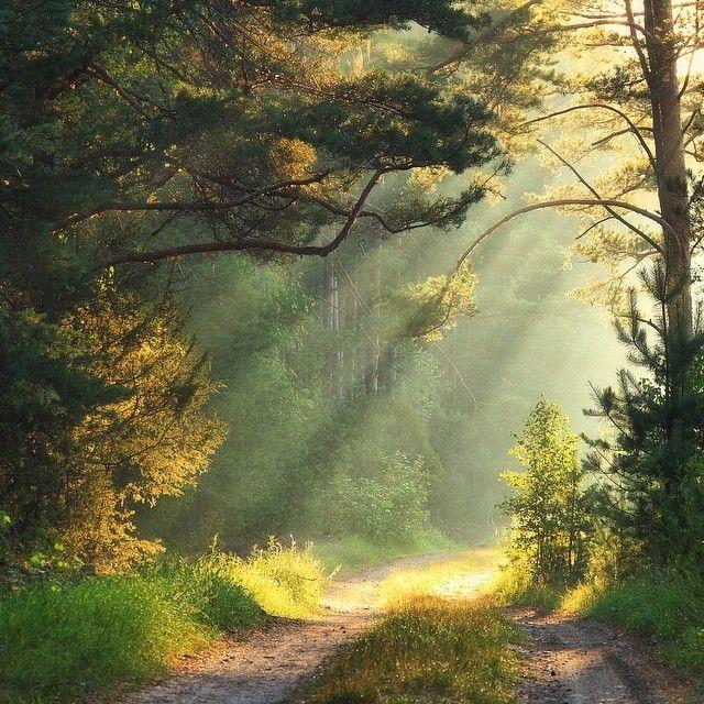 Sun Streams On The Forest Road Belarus By Alex Ugalnikov Alex Ugalek On Instagram Beautiful Photography Nature Nature Photography Forest Photography