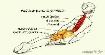 Schéma des muscles qui travaillent