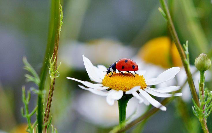 photo: Ladybird   photographer: Saranikolai   WWW.PHOTODOM.COM