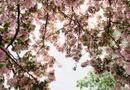 Can You Use a Weeping Cherry in an Island Bed With Other Plants & Shrubs? | Home Guides | SF Gate