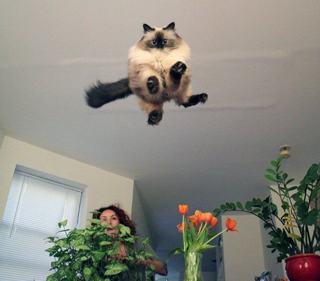 flying cat16
