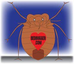 """The best way to kill bed bugs without chemicals is to rent a freezer truck and put all your stuff in it. Let is sit until everything is rock solid frozen after 3 days and voila. Dead bugs. For some peace of mind, you can hire a bed bug dog to sniff out any surviving eggs or bugs, but you won't need to if you freeze them! A lot of college campuses do this!!"""