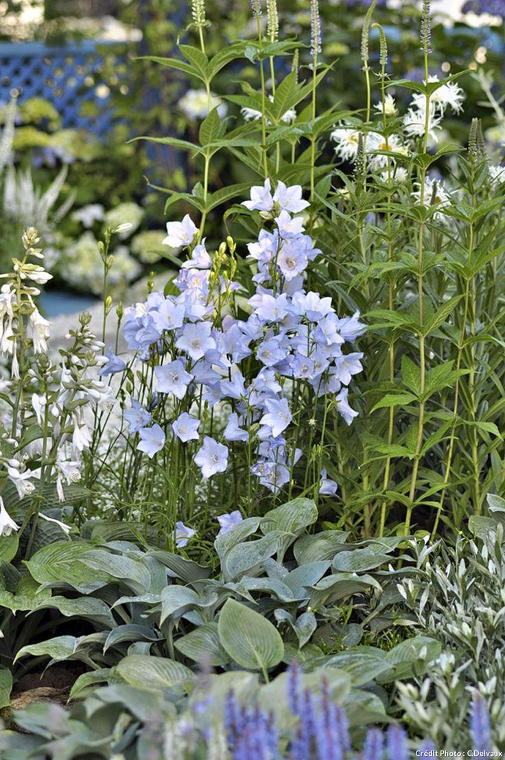 17 meilleures id es propos de fleurs bleues vivaces sur pinterest les fleurs bleues l ombre. Black Bedroom Furniture Sets. Home Design Ideas