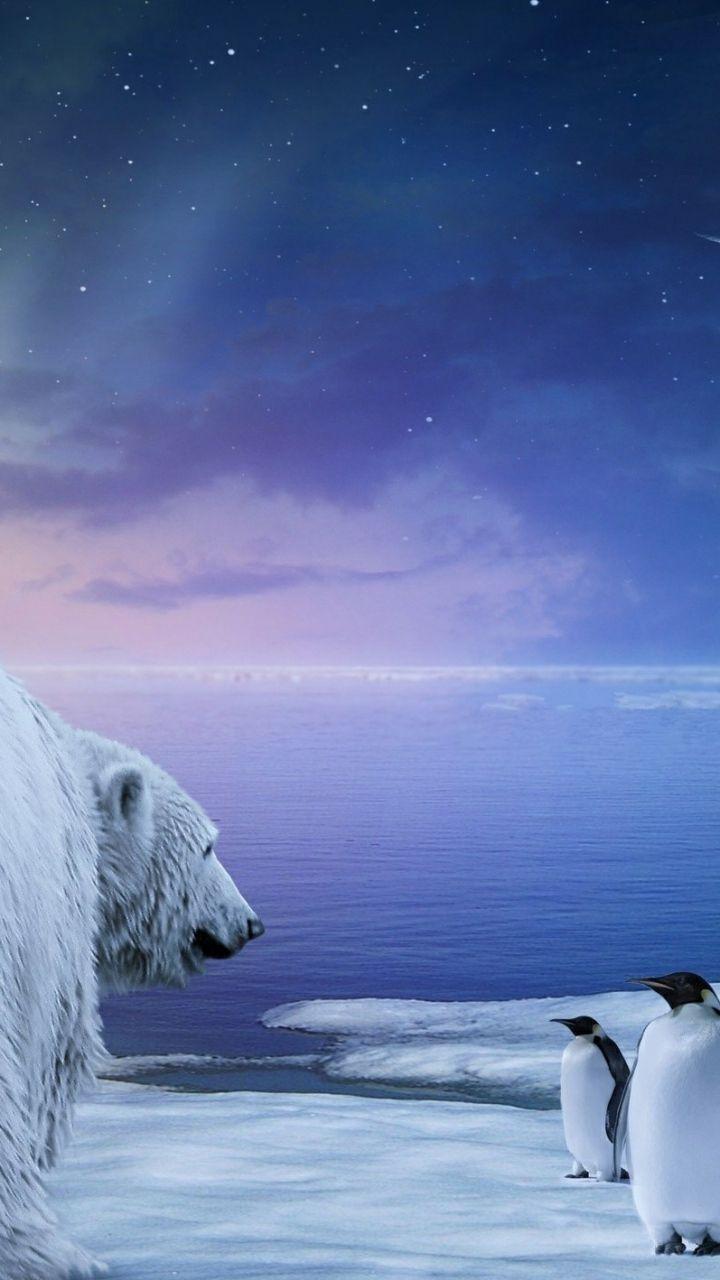 720x1280 magical beach gras hills ocean galaxy s3 wallpaper - Download Wallpaper 720x1280 Polar Bear Penguin Northern Lights Samsung Galaxy S3 Hd Background