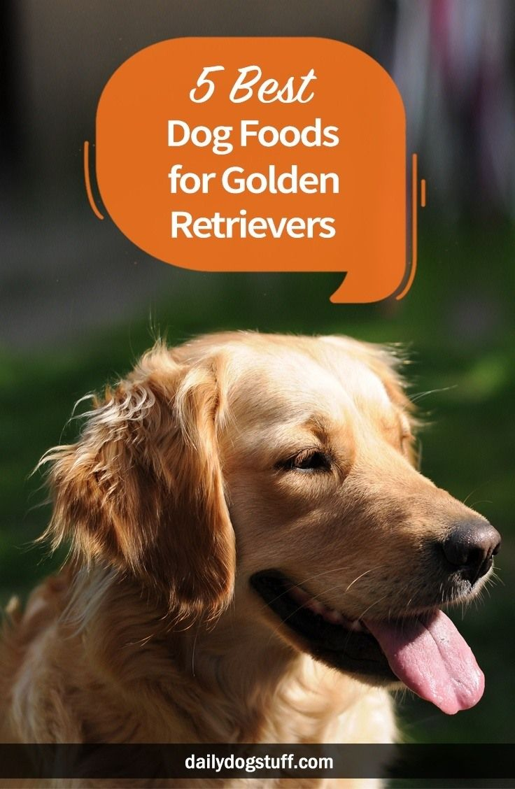 5 Best Dog Foods For Golden Retrievers Best Dog Food Dogs