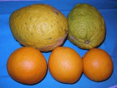 Canditi di arance e cedri