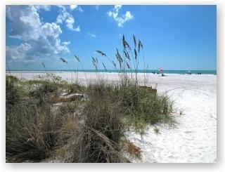 Вчера я узнала, где во Флориде самые лучшие пляжи. Честно говоря, мне казалось, что я это уже знаю, потому как объехала полуостров по всему периметру его. На мой дилетантский взгляд, вода вокруг Флориды везде одинаковая – теплая и соленая. Мне самое главное, чтоб окрестности были почище, а таких мест – не счесть.