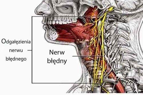 """Jeśli """"obudzisz"""" swój nerw błędny dzięki specjalnej techniki oddychania, będziesz mógł wykorzystać wszystkie jego cenne dla Twojego organizmu właściwości."""