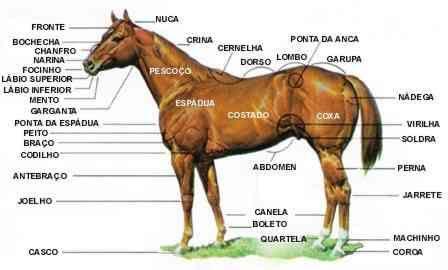 Quarto de Milha 2 Fotos Raça de Cavalo Quarto de Milha