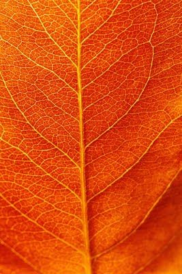 REPINNED: #fall #leaves