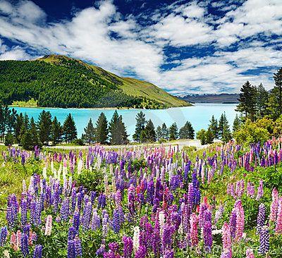Lake Tekapo - perfection