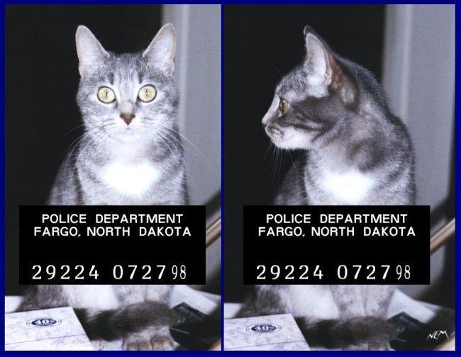 Девять историй про животных-преступников