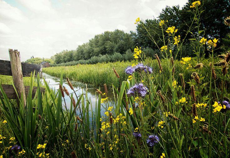 Polderlandschap bij de Bermweg te Capelle aan den IJssel.