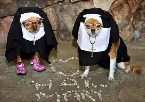 I 17 costumi più esilaranti di Halloween per vostro cane o gatto