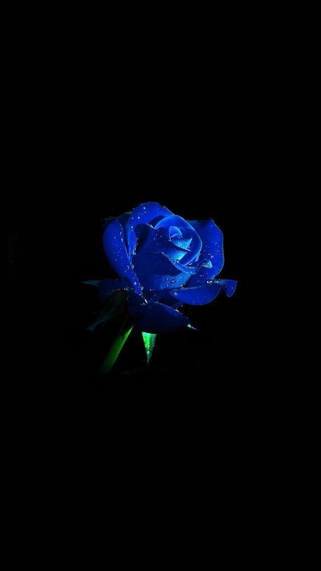 Untitled In 2020 Blue Roses Wallpaper Blue Flower Wallpaper Blue Wallpaper Iphone