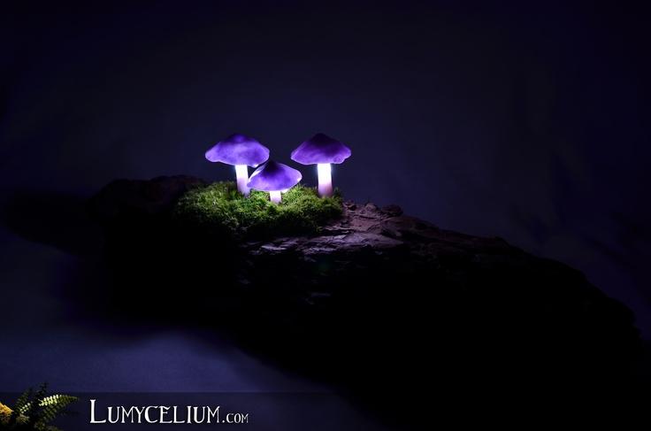 LUMYCELIUM - Tripod   Petits champignons violets à LED sur écorce d'arbre et mousse végétale stabilisée - Vu de nuit