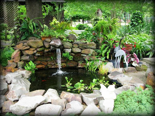 Goldfish pond outdoor goldfish pond pinterest for Outdoor garden ponds