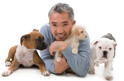Cesar Millan Giving Dog Praise