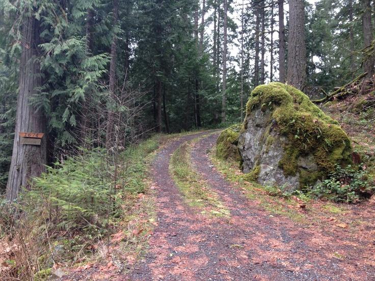Mossy Shawnigan Lake driveway