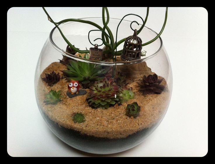 Succulent terrarium with red owl.: Red Owl, Owl Terrarium, Succulent Terrarium, Delicious