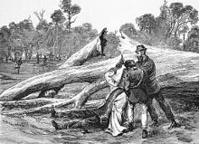 Drawing of Ned Kelly's capture; note the fallen tree he's leaning against.