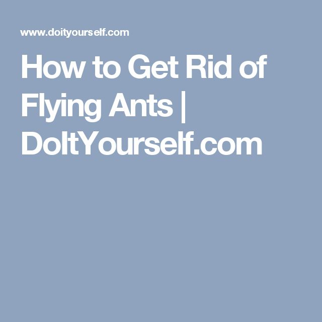 25 best ideas about flying ants on pinterest pest control supplies what kills fruit flies. Black Bedroom Furniture Sets. Home Design Ideas
