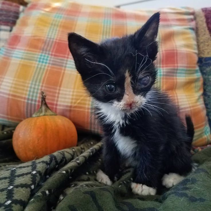 Georgie opened her injured eye after a few days of nursing kitten formula from a dropper and it wasn't exactly pretty. She likely developed acute glaucoma from a mysterious impact. #sickkitty #glaucoma #veterinarian