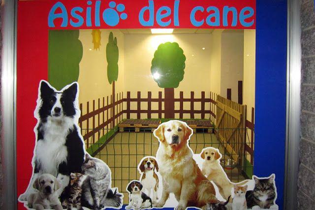 il blog del veterinario: IMPEGNI URGENTI...NIENTE PAURA  ESISTE L'ASILO!