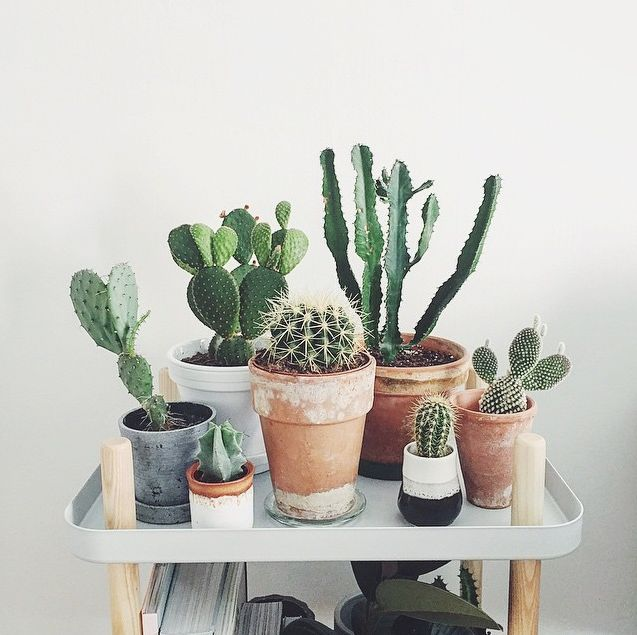 cactus, deco, home decoration, minimalist, minimalism, design