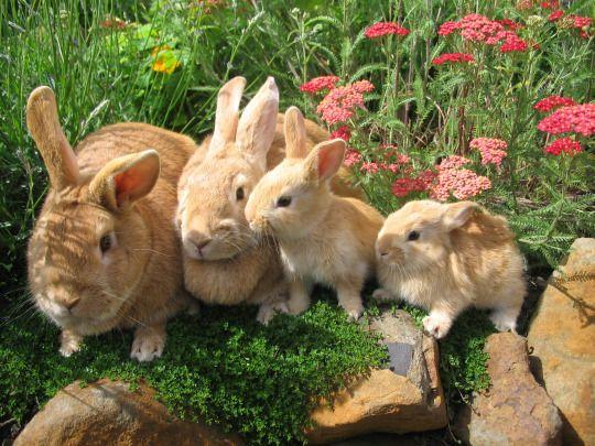 Bunny Fields