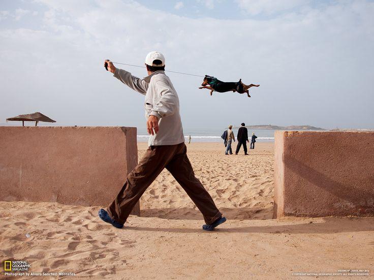 """La pratica porta alla perfezione, anche per i cani. Questo supera con un solo balzo il varco in un muretto della spiaggia di Essaouira. Il """"decollo"""" è stato preceduto da una rincorsa, e da diversi salti di prova.  Fotografia di Álvaro Sanchez-Montañes"""