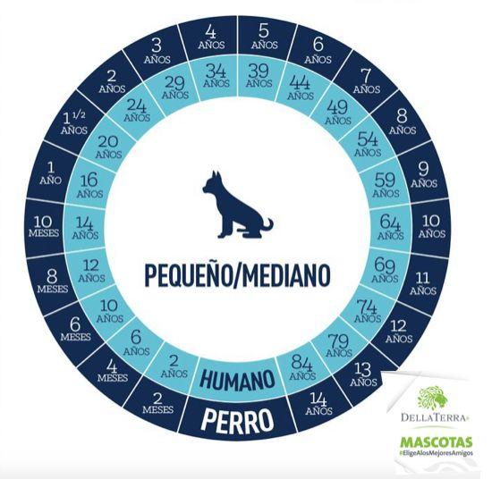 ¿Conoces la edad de tu perro?  Aqui te damos a conocer el dato de las razas pequeñas y medianas. Parte 1  #EligeConsentirATuMascota