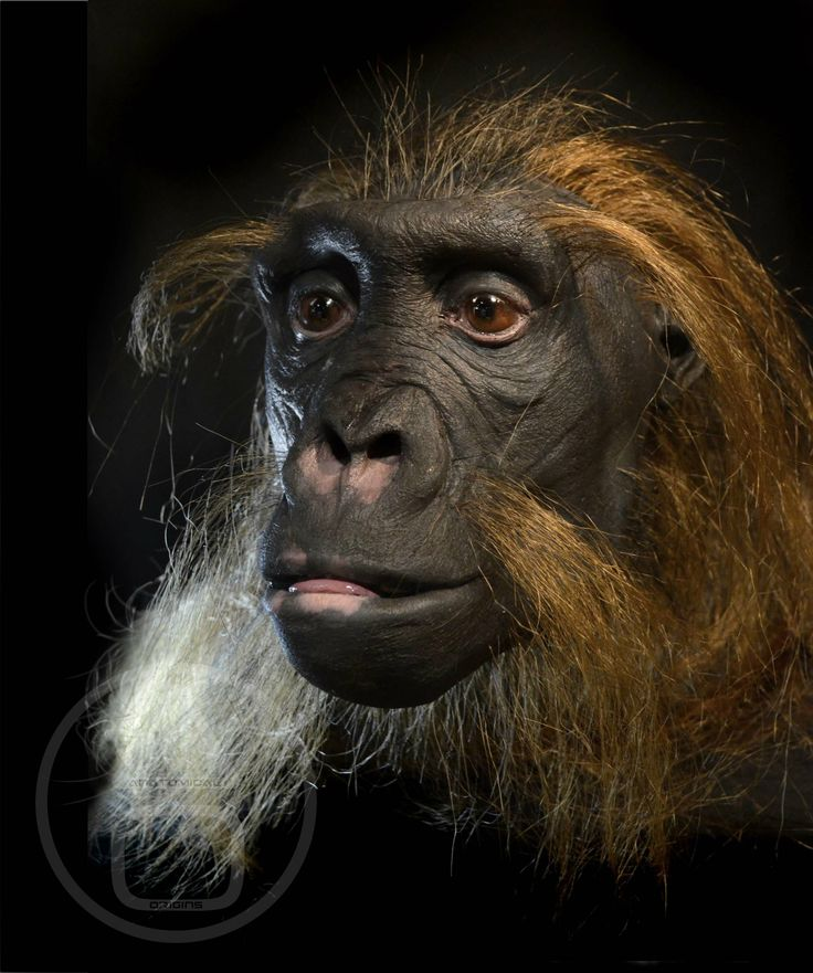 175 best Evolución images on Pinterest | Human evolution, Early ...