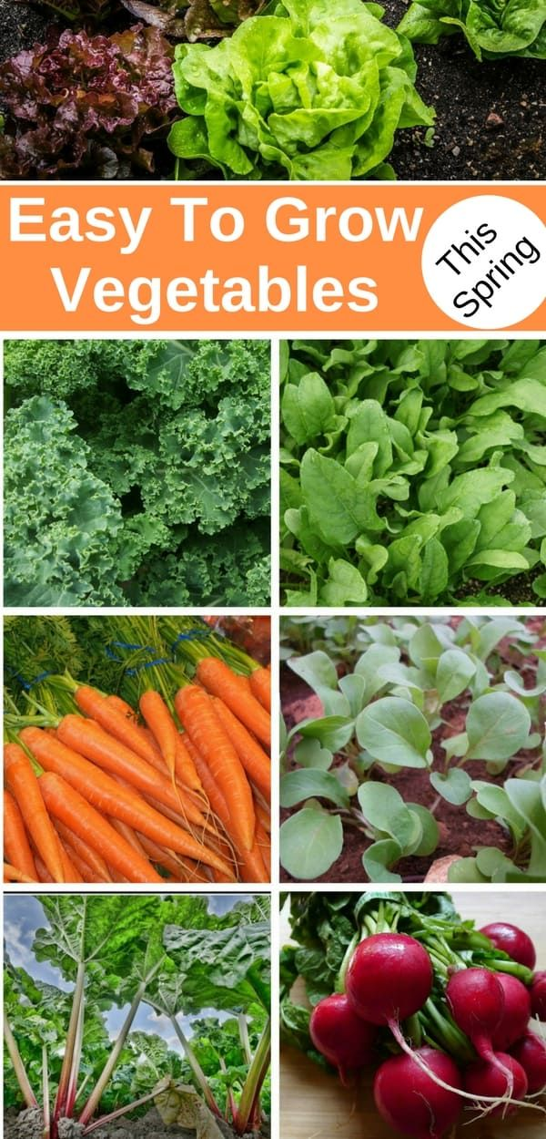7 Easy Vegetables To Grow This Spring Easy Vegetables To Grow Growing Vegetables Growing Celery
