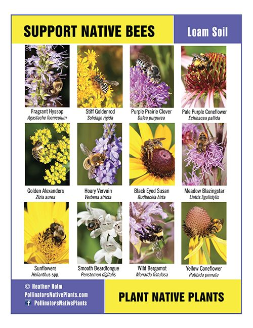 Support native bees with these plants that grow in loam for Soil support