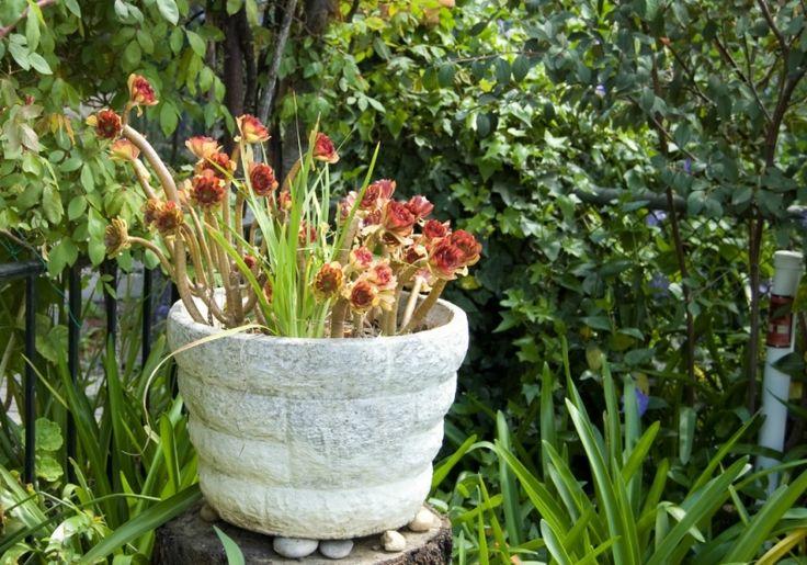 Поделиться в социальных сетях«TickleTank» удивительный и на первый взгляд даже странный дом с садом, расположенный в Adelaide Hills (Южная Австралия). Принадлежит жилище художнице Ирэне Камень Пирс. Посещение дома – это …
