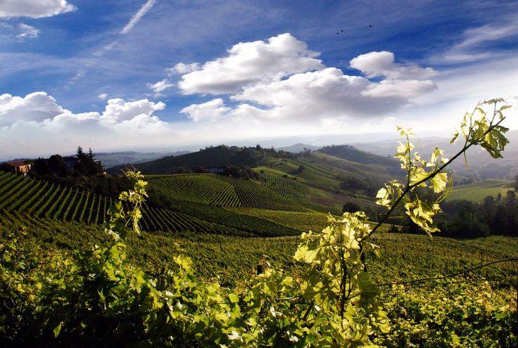 Monferrato, Piemonte, Italia.  Land of Barbera!