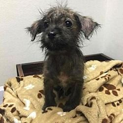 Pictures of Po a Terrier (Unknown Type, Medium) for adoption in New York, NY who needs a loving home.
