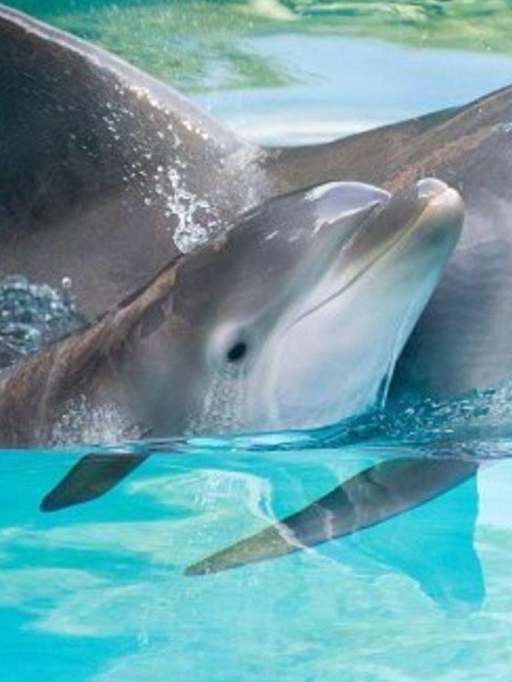 Рождение дельфина картинки