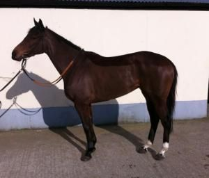 Winning Flat Broodmare By Holy Roman Emperor For Sale Now