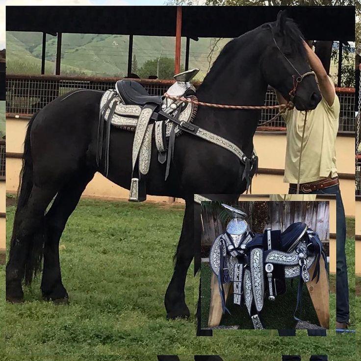 M s de 25 ideas incre bles sobre monturas para caballos en for Monturas para caballos