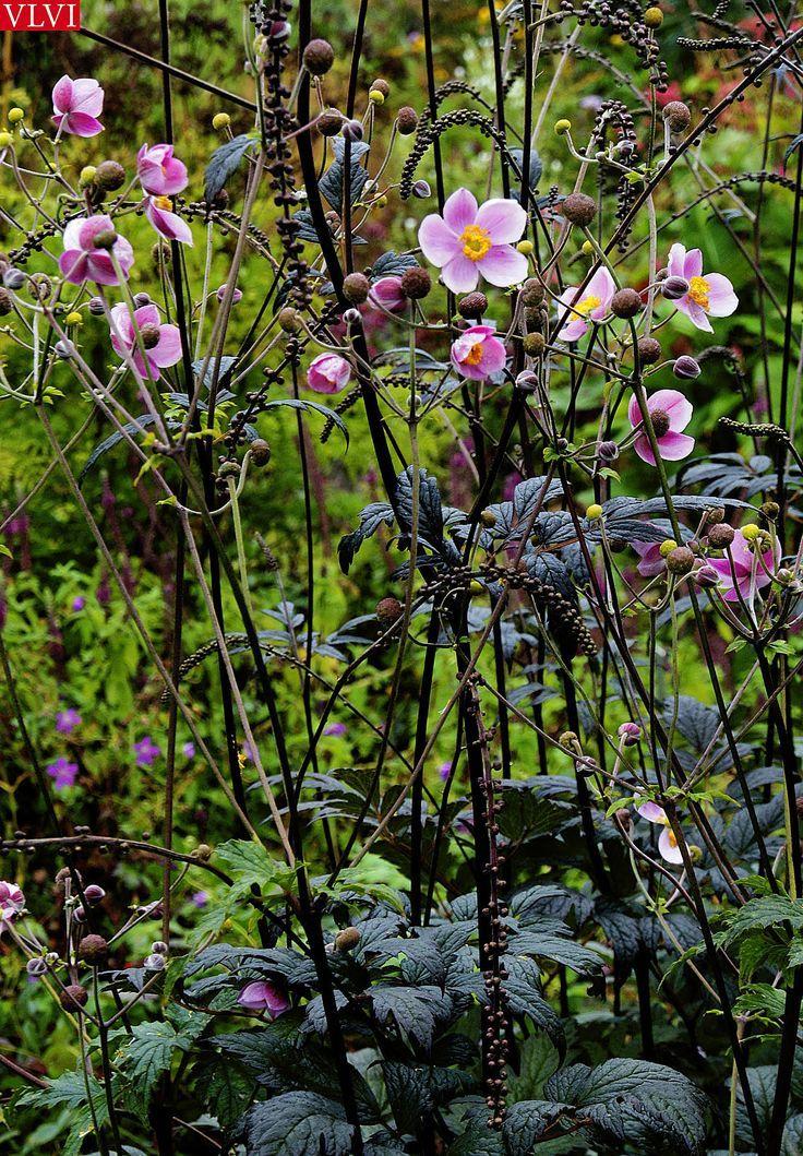 30-08 | in de tuin bij Piet Oudolf: